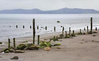 trästolpar med lera och tång på stranden av
