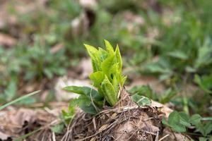 växt. foto
