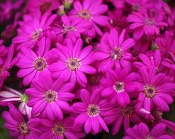 plantera blommor och växter Sydafrika ... foto