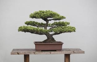 bonsai växter