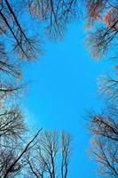 trädkrona med blå himmel foto