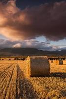 runda halmbalar på fälten vid solnedgången foto