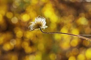 höstväxt foto