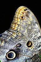 detaljerat makro av fjärilsvingen foto