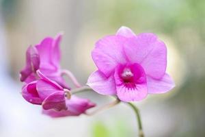 orkidéväxter foto