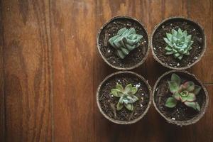 saftiga växter foto