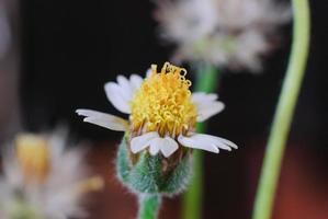 blomma växt gräs ogräs foto