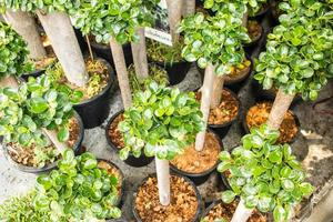 prydnadsväxter gröna foto