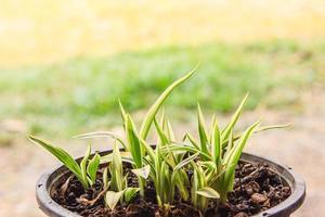 unga växter växer foto
