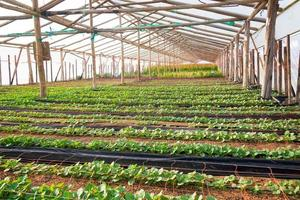 växter i ett växthus foto