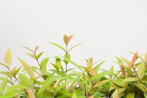 gröna blad växt på väggen foto