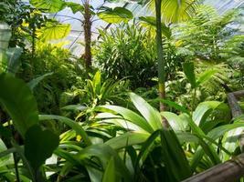 gröna växter i växthuset foto