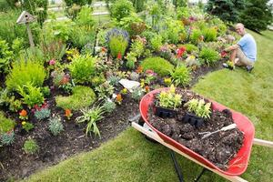 man planterar i trädgården