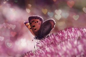 valentin fjäril - mångfärgad hjärta bokeh foto