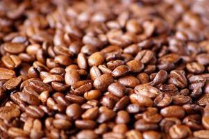 kaffeböna foto