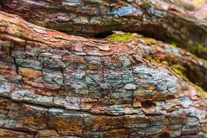 bark av träd