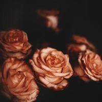 vintage blommor foto