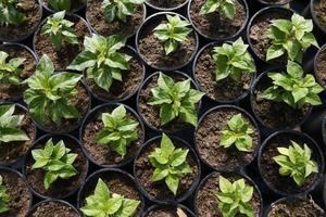 plantera plantor i krukor