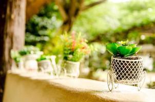 färgade krukväxter