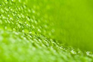 vattendroppar på grönt växtblad