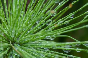 närbild morgondagg på grön växt foto