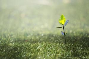 ung växt på grästextur i Thailand foto