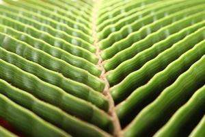 palmträdblad