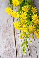 vilda gula blommor foto