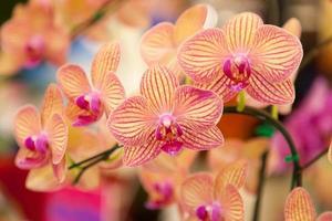 orkidéer.