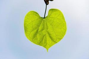 grönt löv