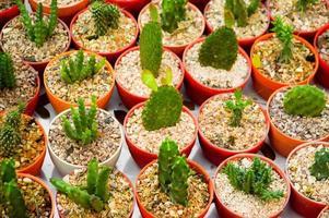 grönt kaktusträd foto