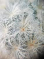 makro kaktus foto