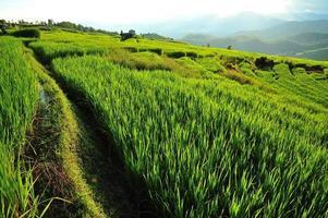 risfältfält foto