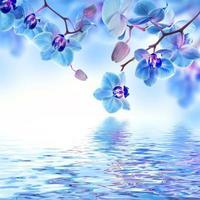 blommig bakgrund av tropiska orkidéer foto