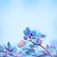 blommig bakgrund foto
