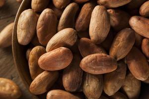 råa organiska kakaobönor