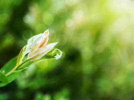 sommarväxt med suddig grön bakgrund foto