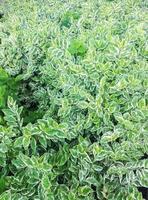 vacker lövverk växt buske natur grön bakgrund foto