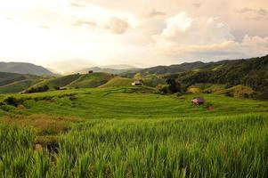 ris terrasserade fält landskap på berget foto