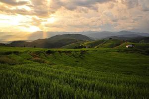 risfält på terrasserade åkrar foto