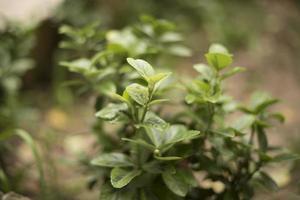 grön leafed växt närbild foto