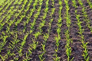 tunnland med gröna växter i morgondagg