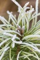 markfrost på ängen. frost på växterna. foto