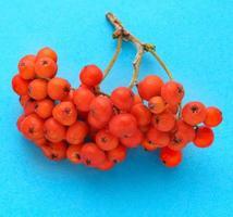 röd ashberry