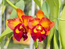 vackra orkidéblommor på gården