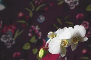 vit orkidé på en svart bakgrund foto