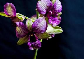 orkidéernas skönhet svart bakgrund. foto