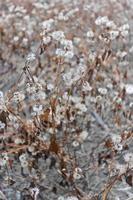 grå död blomma