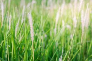 närbild av vildblommor och växter i soligt fält