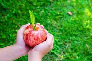 färsk äppelfrukt i ett barns hand foto